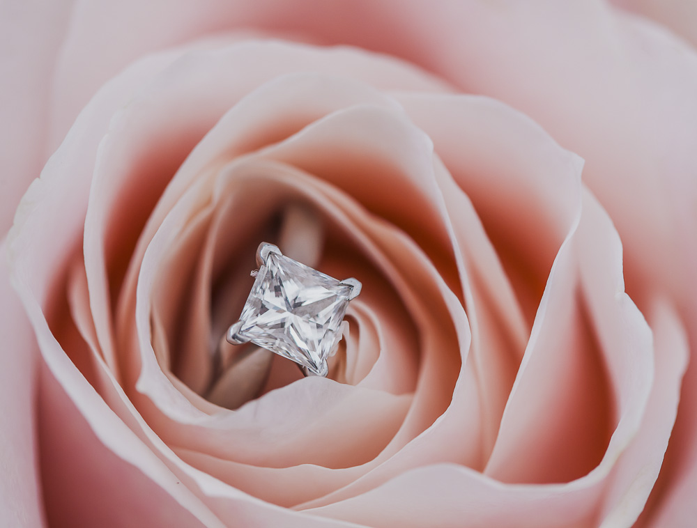 Wedding ring in a rose Eloy Muñoz Photography